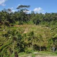 things-to-do-in-ubud
