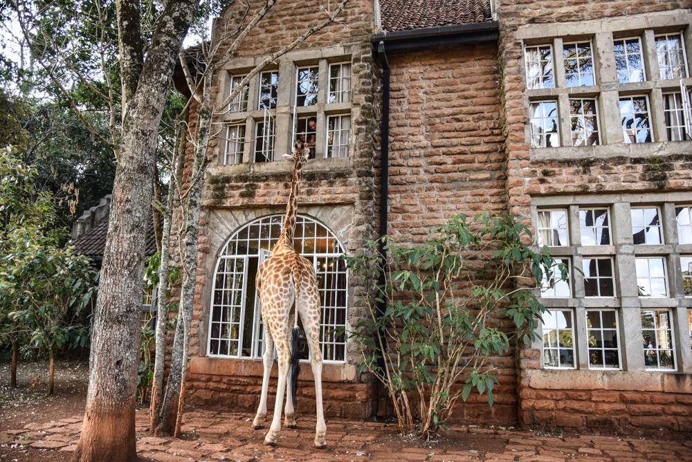 hotel-review-giraffe-manor_-112