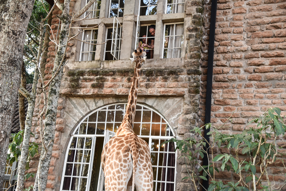 hotel-review-giraffe-manor_-113
