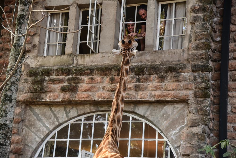 hotel-review-giraffe-manor_-114
