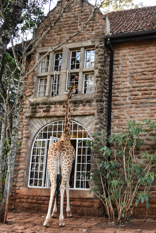 hotel-review-giraffe-manor_-116