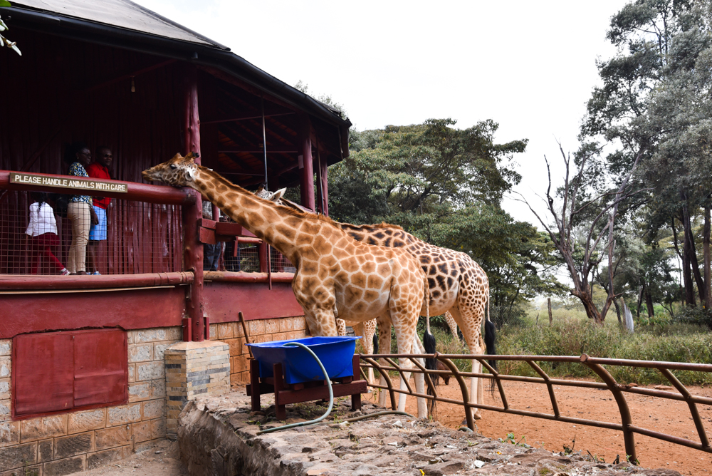 hotel-review-giraffe-manor_-48