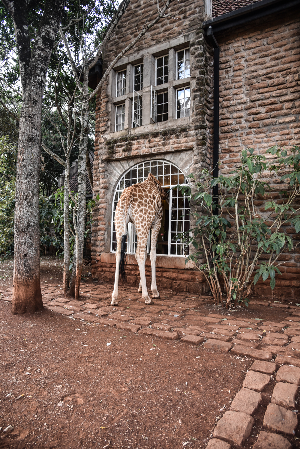 hotel-review-giraffe-manor_-60