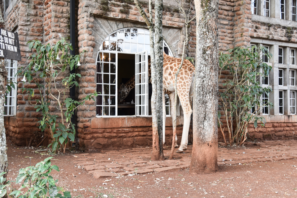 hotel-review-giraffe-manor_-64