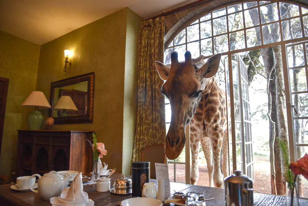 hotel-review-giraffe-manor_-69