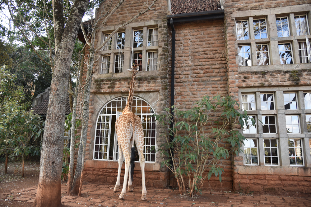 hotel-review-giraffe-manor_-70