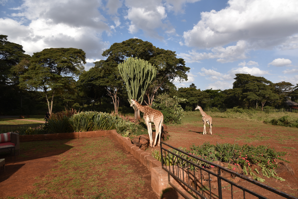 hotel-review-giraffe-manor_-73