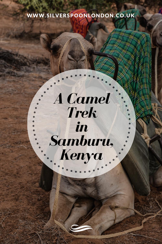 a-camel-trek-in-samburu