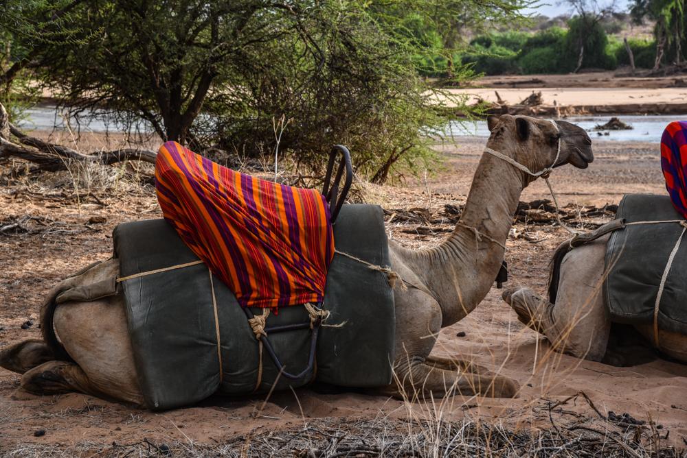 luxury-hotel-review-sasaab-samburu-205