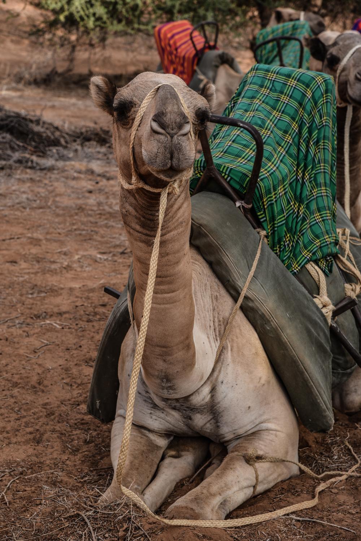 luxury-hotel-review-sasaab-samburu-209