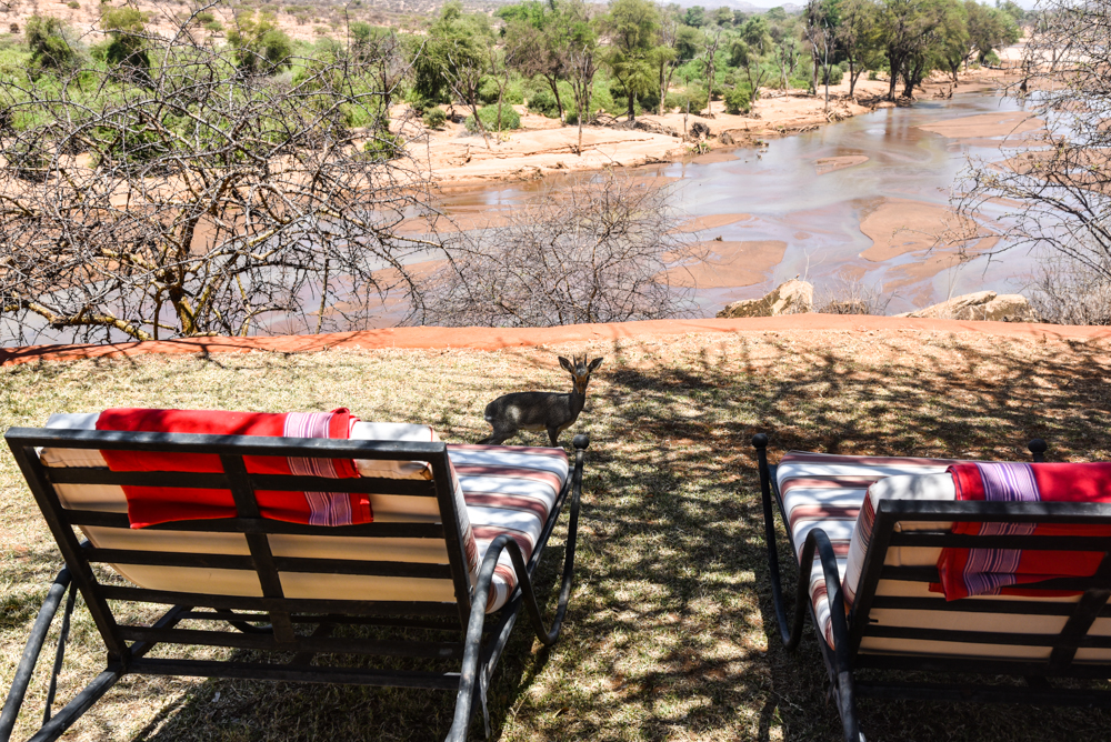 luxury-hotel-review-sasaab-samburu-9