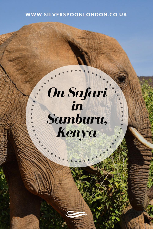 on-safari-with-sasaab-samburu